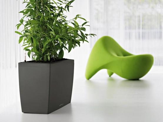 intretinere-plante-ornamentale