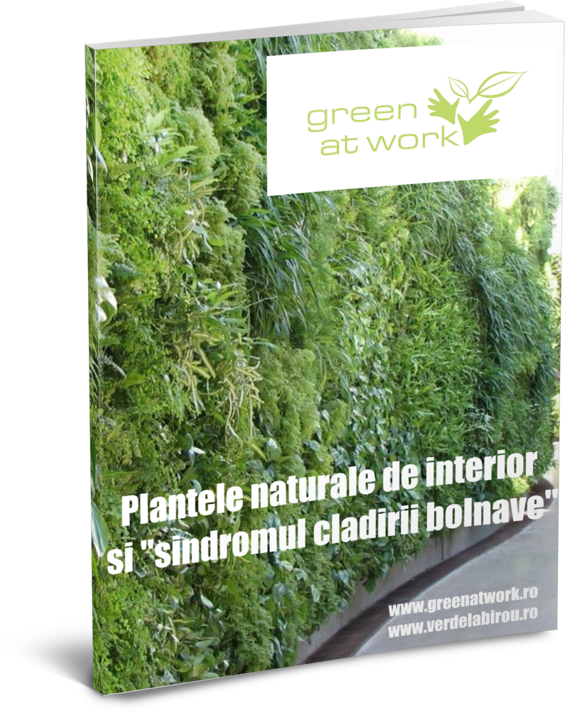 plantele-sick-building-syndrome