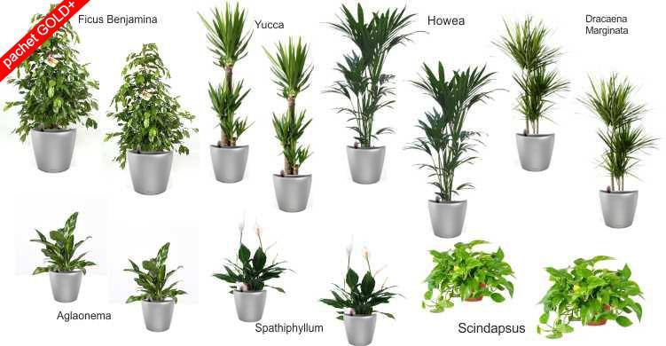 plante-decorative-pachet-gold-lechuza