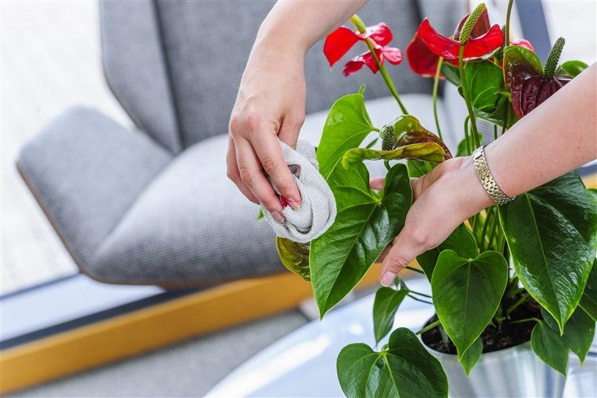 intretinere-plante-interior