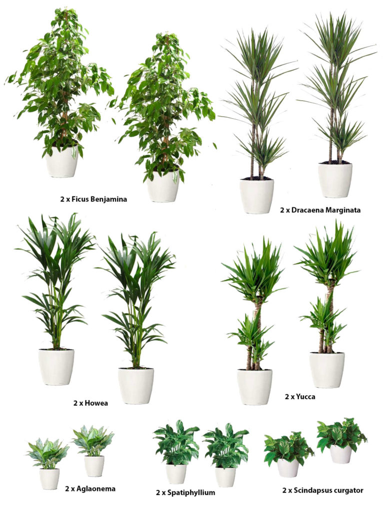 Pachet plante birou CORPORATE Lechuza