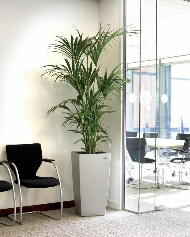 plante-birouri-lechuza-testare-gratuita