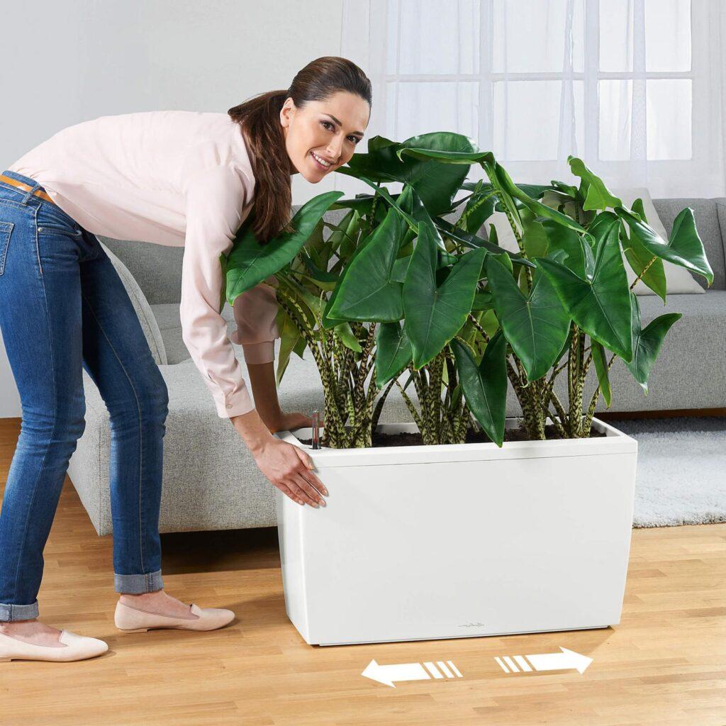 intretinere-plante-birouri-mentenanta
