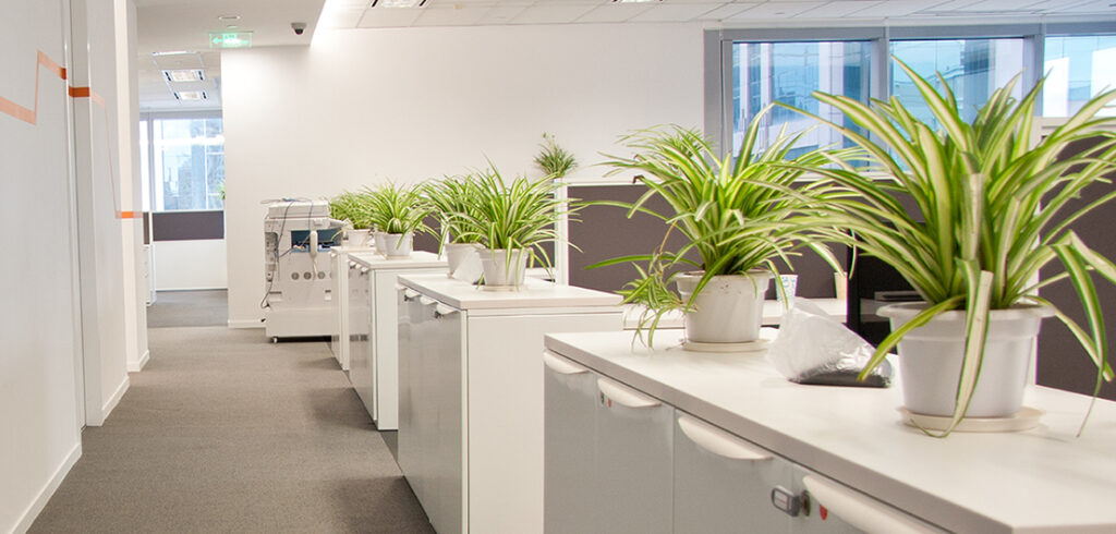 plante-la-birou-openspace