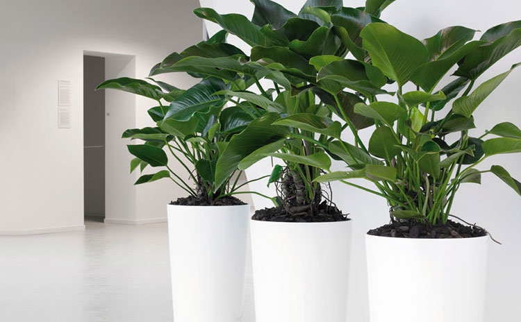 plante-corporate-ambientare