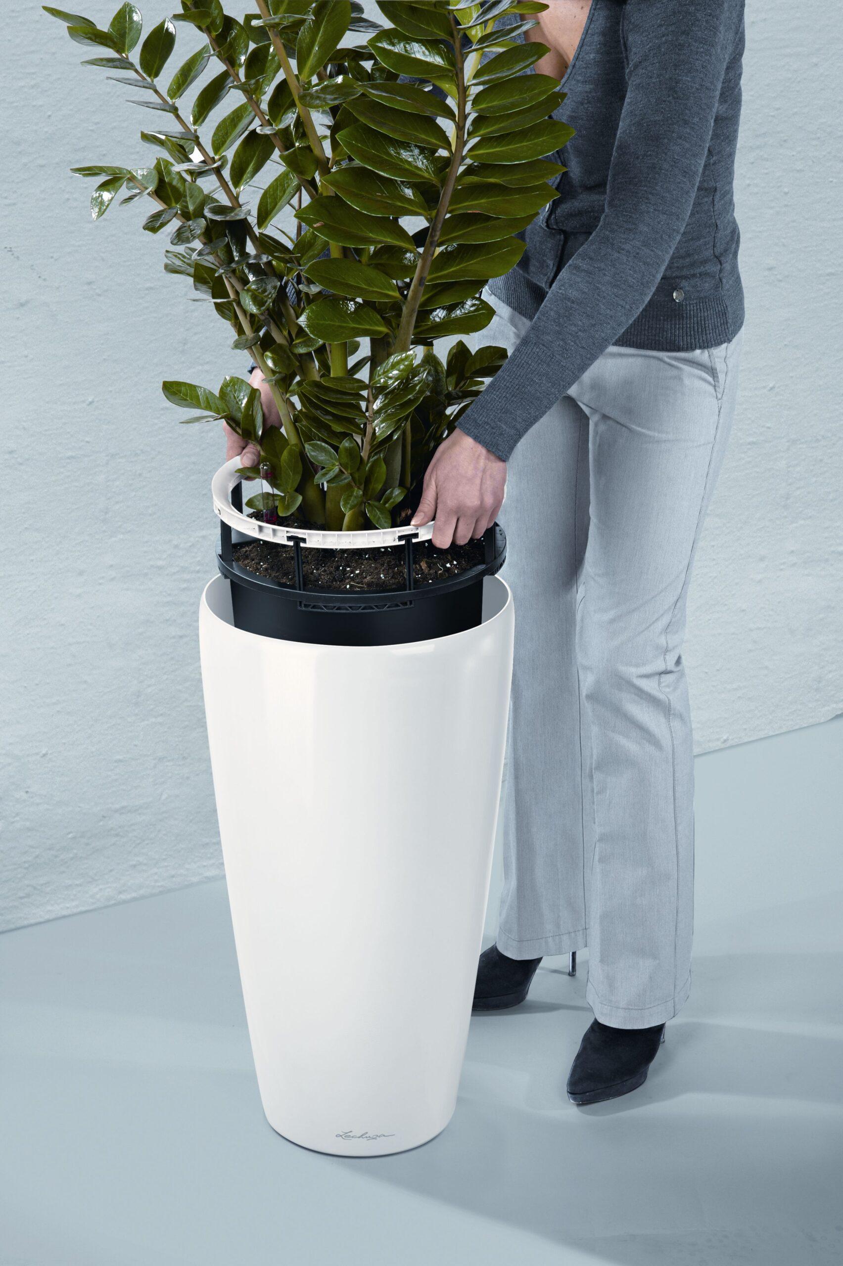 zamioculcas-intretinere-plante-lechuza