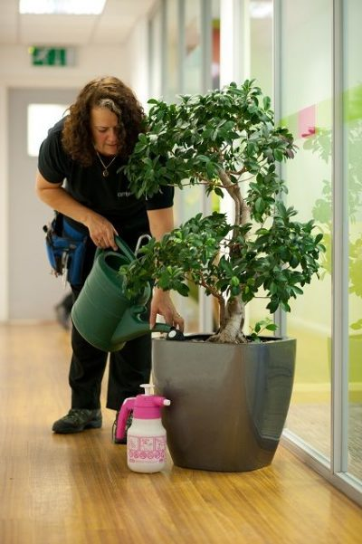 mentenanta-plante-birouri-1